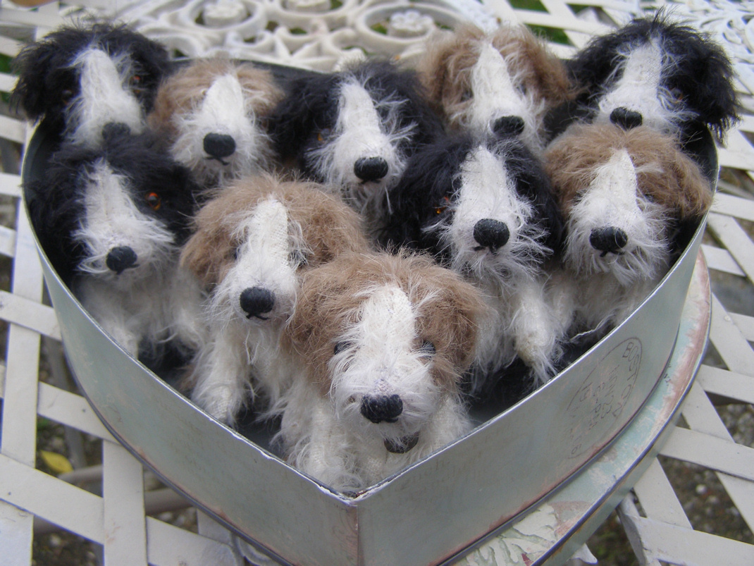 10 puppies in miniature mohair